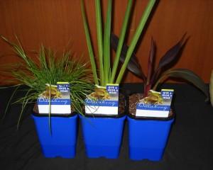 Billabong Waterplants